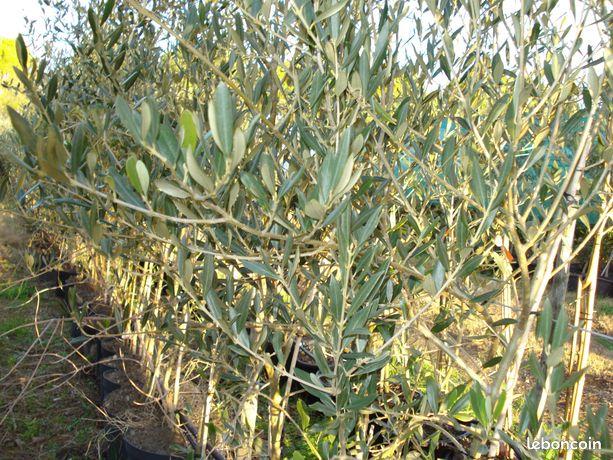 Outils De Jardinage Languedoc Roussillon Nos Annonces