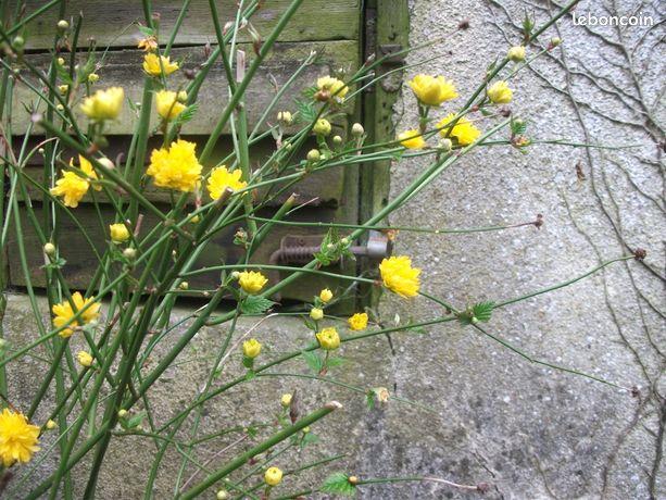 Outils De Jardinage Sarthe Nos Annonces Leboncoin